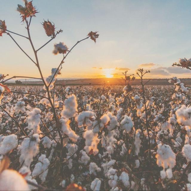 我們的衣物特別選用了 100%有機原色棉 (100% Organic PRIMARY Cotton) 🌱🌱 我們的棉花保證:⠀.通過國際認證 ⠀.初生嬰兒安全 ⠀.具可持續性⠀.不含染料 ⠀.不含螢光劑 ⠀.不含化學農藥 ⠀.不含重金屬 ⠀.不含甲醛 ⠀.不含氯苯酚⠀_____________⠀⠀了解有機原色棉對 BB的好處 - 連結在 » @thepetitsoldierhk⠀.⠀#organiccotton #thepetitsoldierhk #primarycotton #organiccotton #thepetitsoldierhk #primarycotton #loveyourmum #organicfashion #sustainablefashion #ootd #babyootd #thebloomforum #babyfashion #theselifemoments #montherhood #有機 #有機棉花 #原色棉 #有機嬰兒用品 #英國 #嬰兒 #零污染 #初生衣服 #bb衫 #有機bb衫